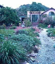 Beautiful permaculture garden irrigated with branched drain gray water system